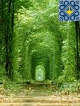 Klevan Sights - Romantic Tunnel of Love