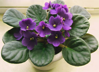 Festival of Violets 2015 | On 21st-25th of October 2015