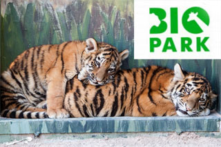 Odessa Zoo Biopark opened on 1st of July 2016 | Tigers, giraffes, lions