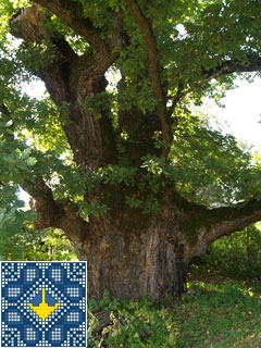 Stuzhytsya Sights | Millennial Grandfather oak and Champion oak